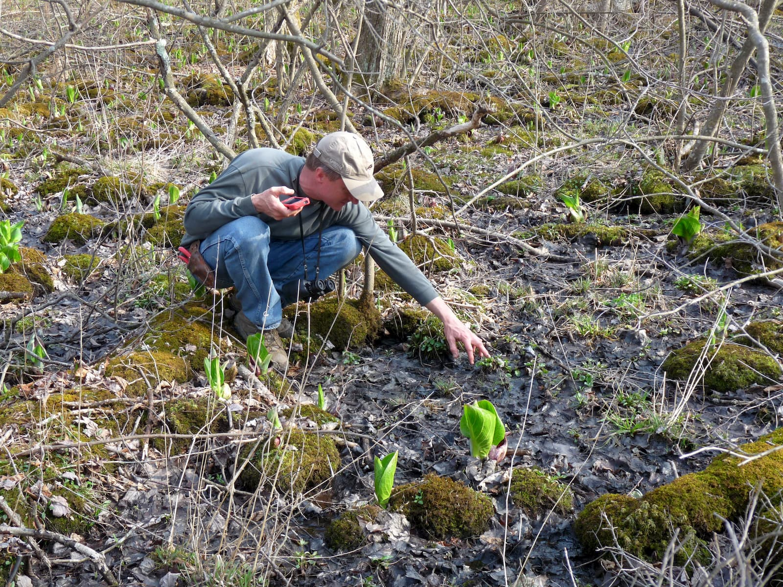 Forest monitoring and observation