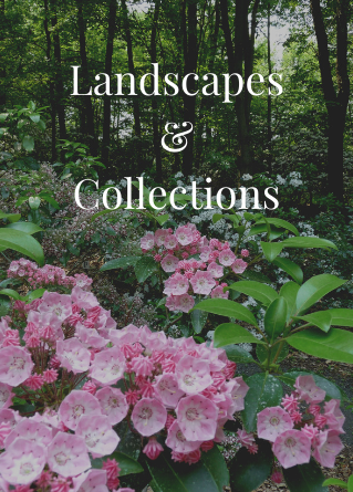 Our landscapes and collections reflect our land stewardship practices.