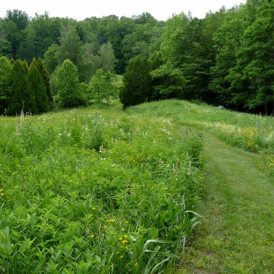 Highstead meadow grass path