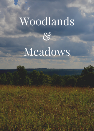 Highstead stewards woodlands and meadows.