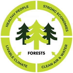 Forests lead to healthy people, strong economies, clean air and water and a livable climate