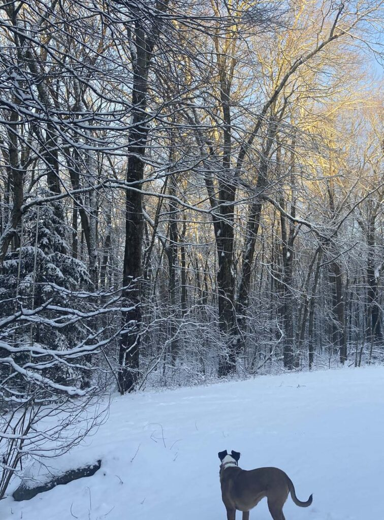 Backyard Climate Solutions. A dog faces away from us toward an open snowy expanse with snow-covered trees.