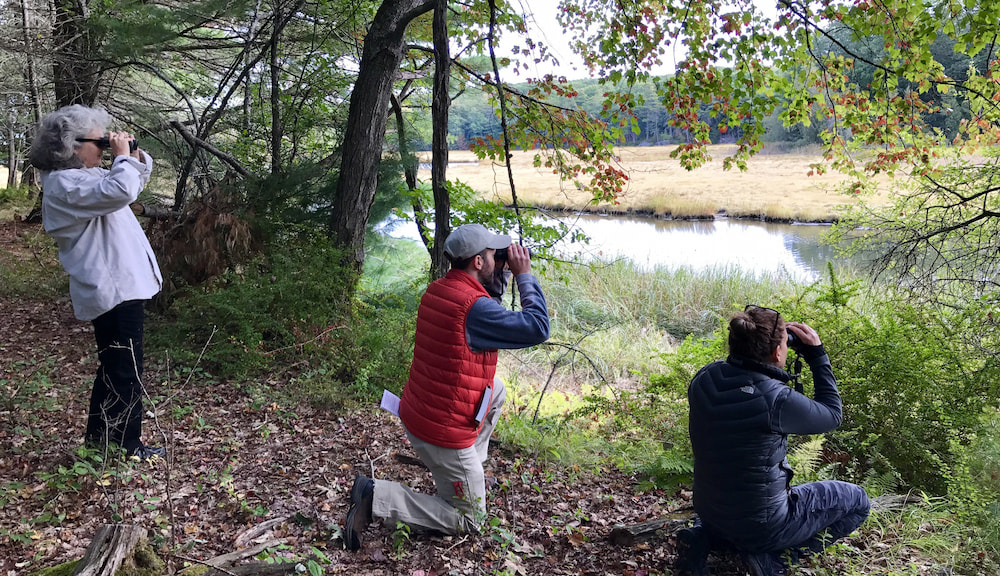 birding in the northeast