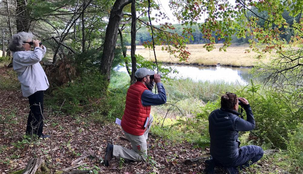 birding in the northeast