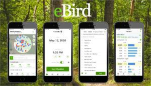 ebird online tool