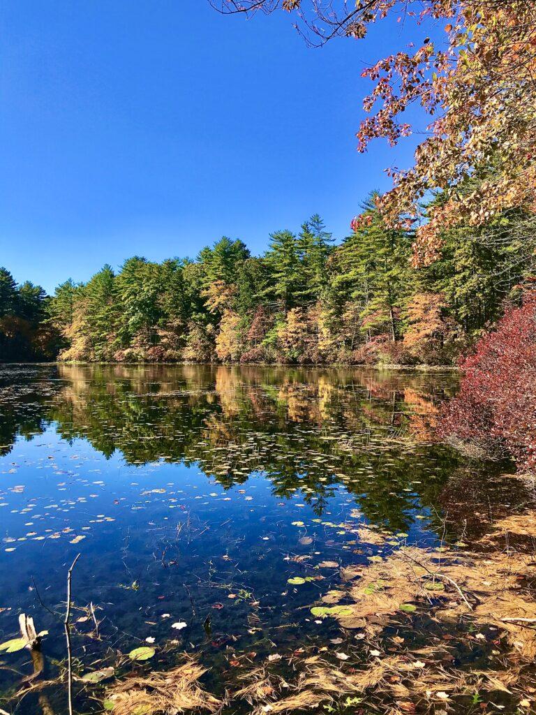 Land conservation at Muddy Pond Wilderness Preserve
