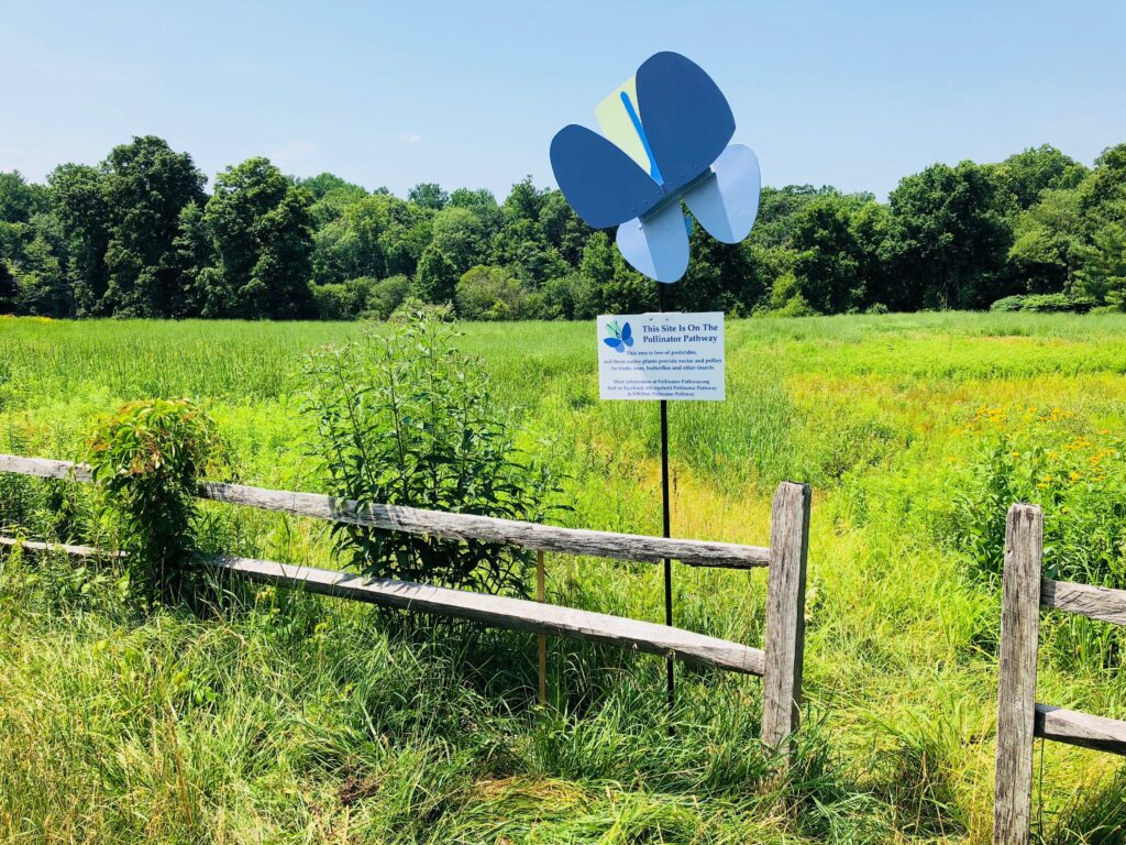 3 Ways to Support Your Local Pollinator At Home. Pollinator Pathway. Photo Credit: Louise Washer