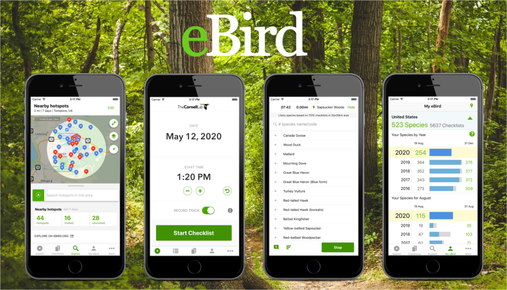 Four cell phones with different eBird application screens