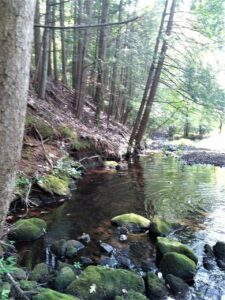 The Mill River Watershed Conservation Project