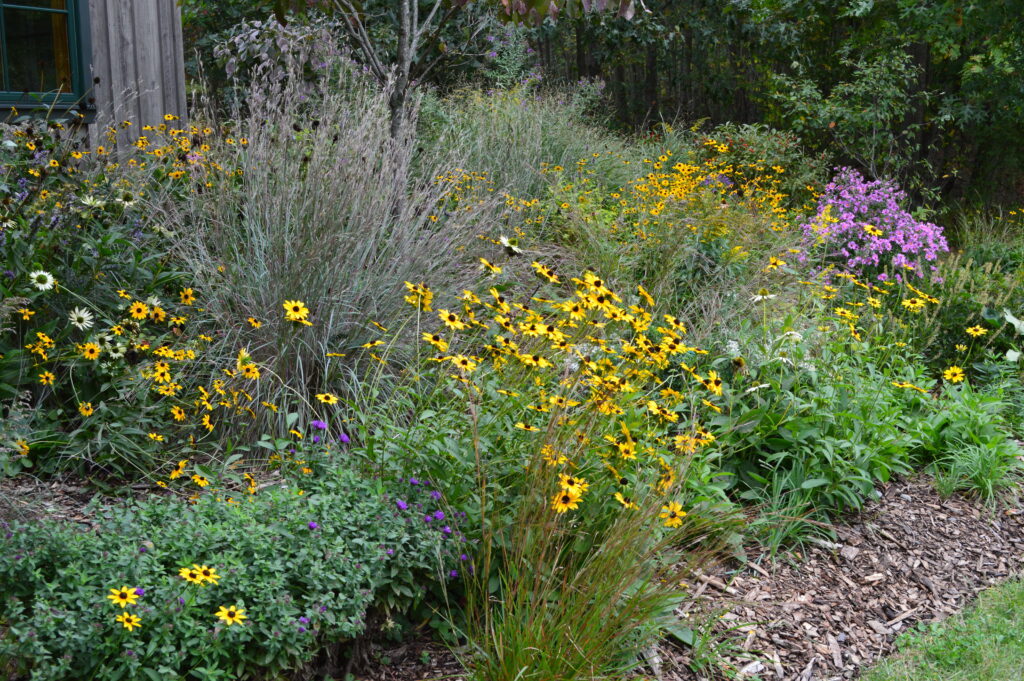 Native plants and flowers. A New Conservation Approach in Your Backyard